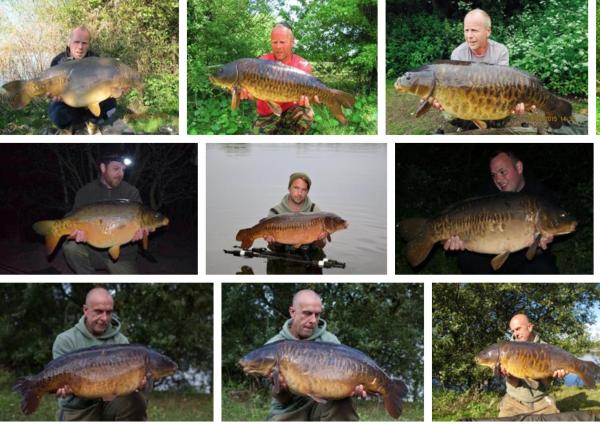 Compilation of UK Fish 2